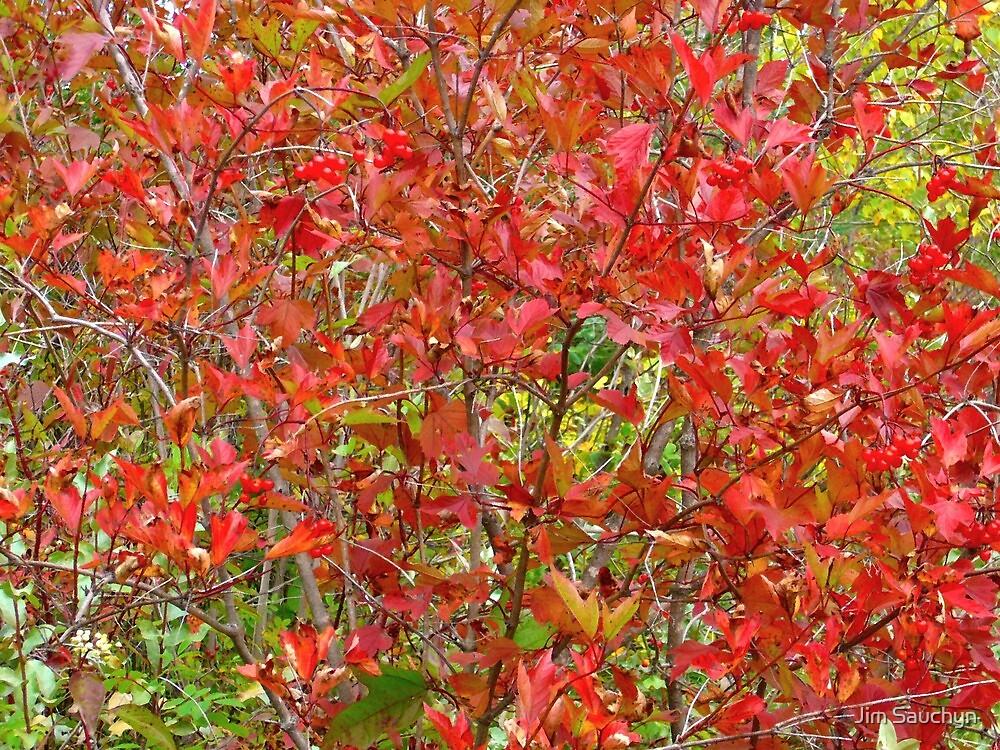 Cranberry bush by Jim Sauchyn