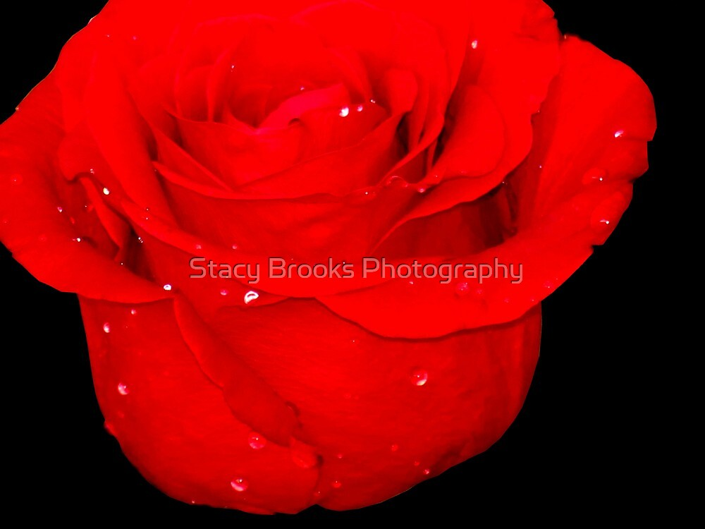Candy Apple Red by Stacy Brooks Photography