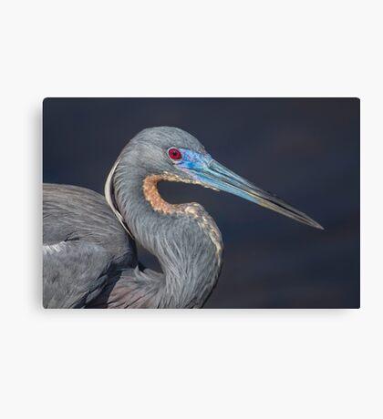 Tricolored profile Canvas Print