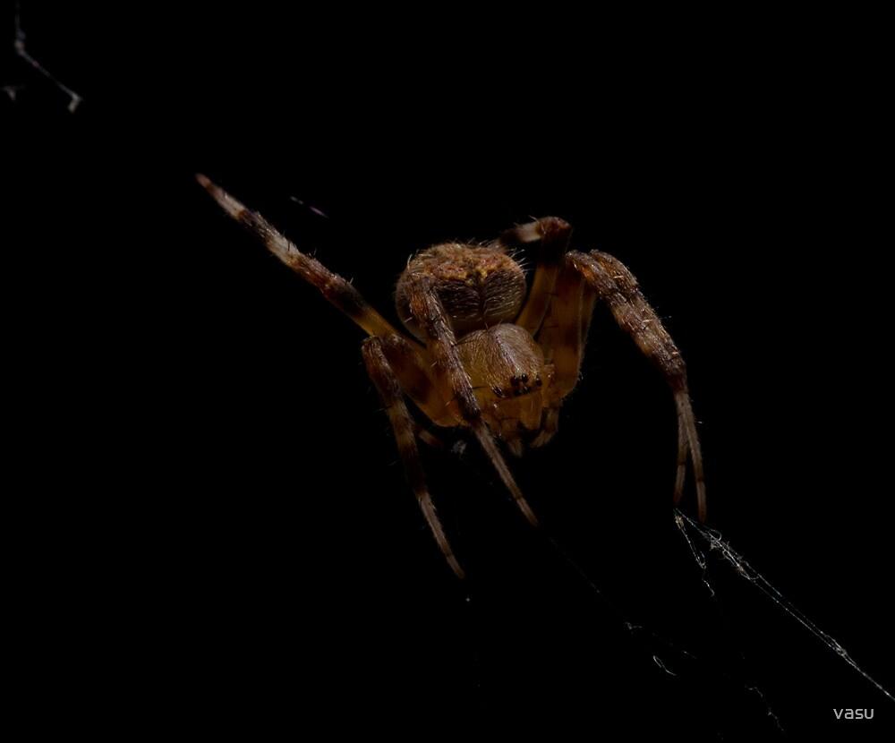 Little Spider by vasu