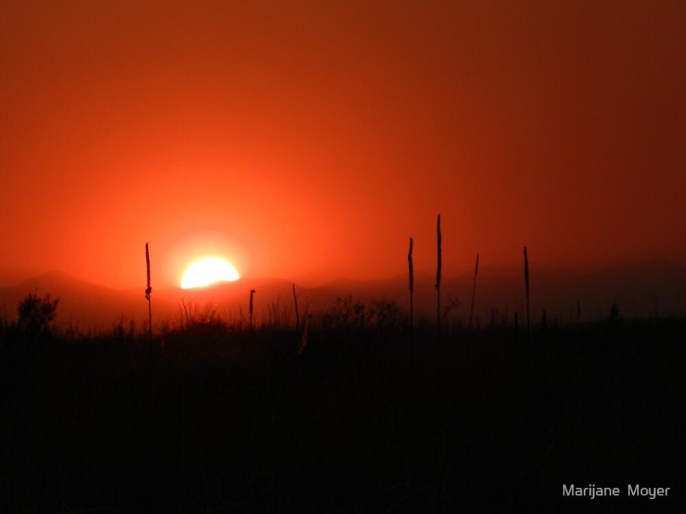 High Park Sunset 1 by Marijane  Moyer