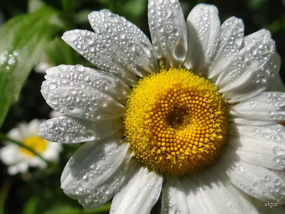 Spring Raindrops by vigor