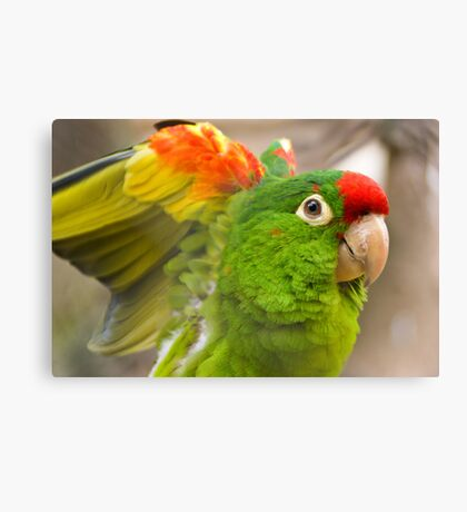 Beautiful Birdy Canvas Print
