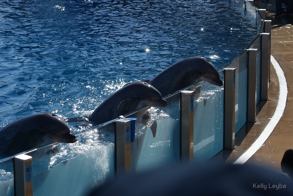 Dolphins enjoying the people show by Kelly Leyba