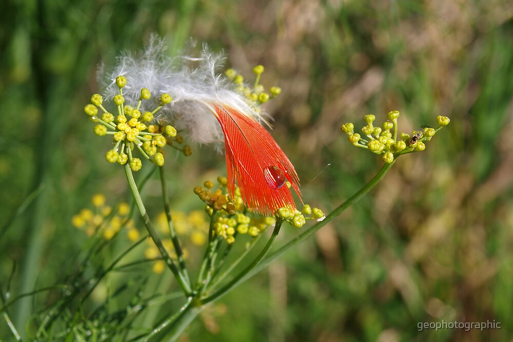 Feather by geophotographic