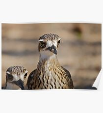 Magnetic Island Curlew Poster