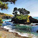 Buckhorn Cove by Barbara  Brown
