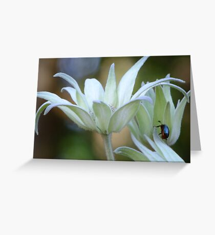 Soft Flannel Flowers Greeting Card