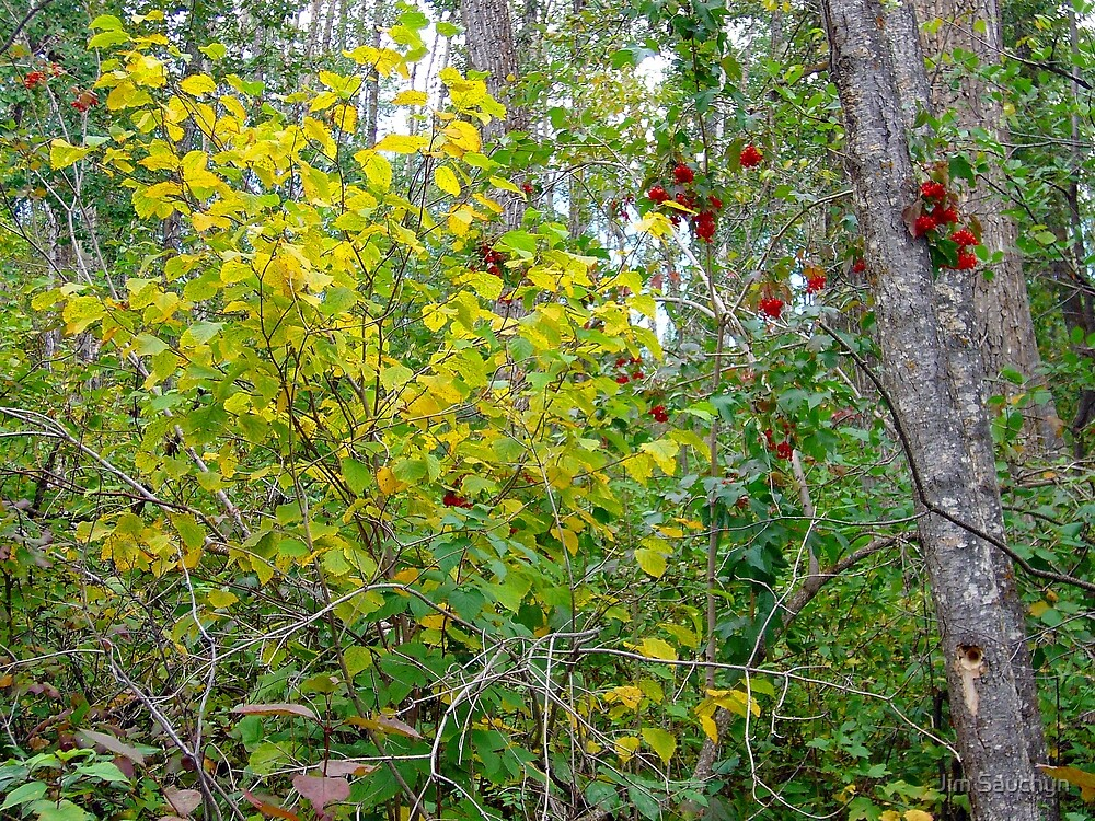 Cranberries in autumn by Jim Sauchyn