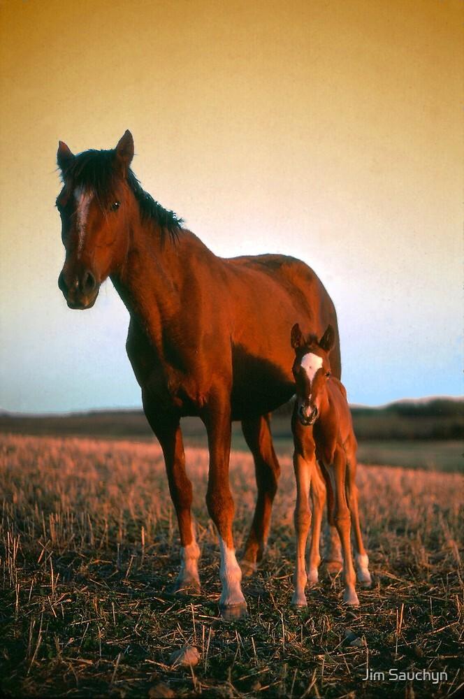 Arabian mare and foal by Jim Sauchyn