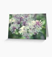 "Lilac ""Palibin"" Greeting Card"