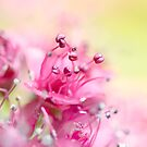 Pink Magic by Sharon Johnstone