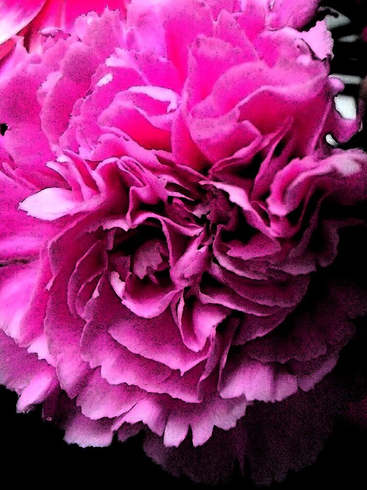 beautiful flower by Amy101
