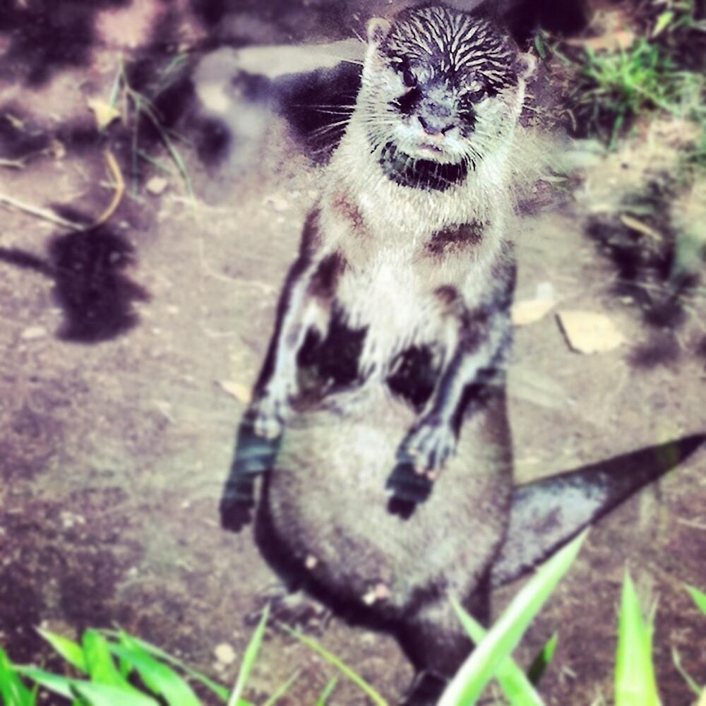 Otter by Kokid