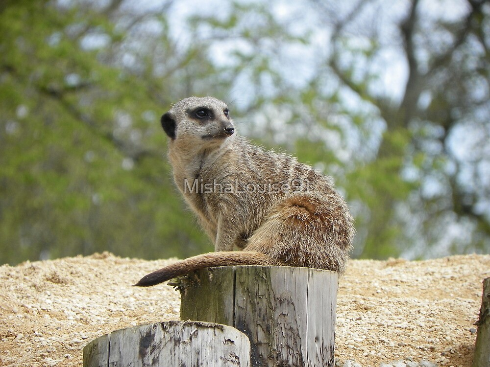 Meerkat by MishaLouise91