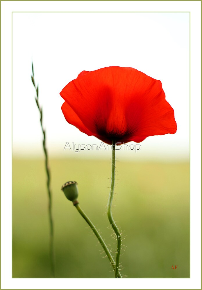 Poppy Power! by AlysonArtShop