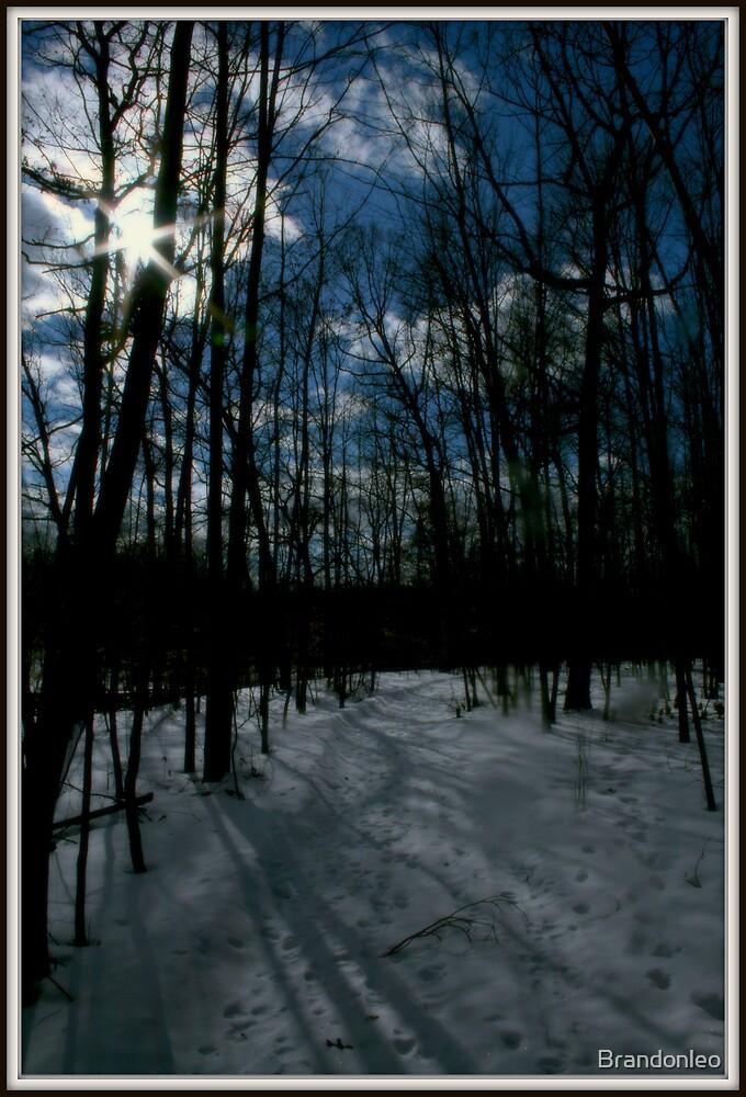 Snowy Walk by Brandonleo