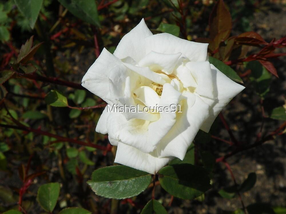 Single White Rose by MishaLouise91