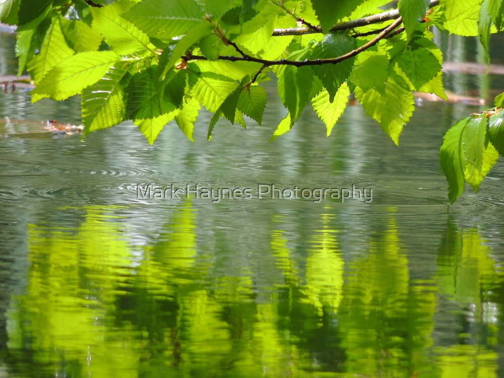 Dipping Leaves by Mark Haynes Photography