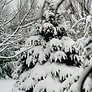 Winter by Mikeb10462