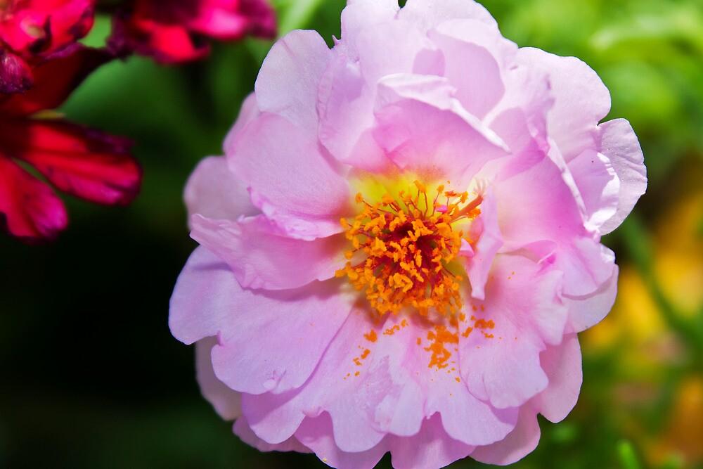 A Flower in my Garden by Ray Chiarello