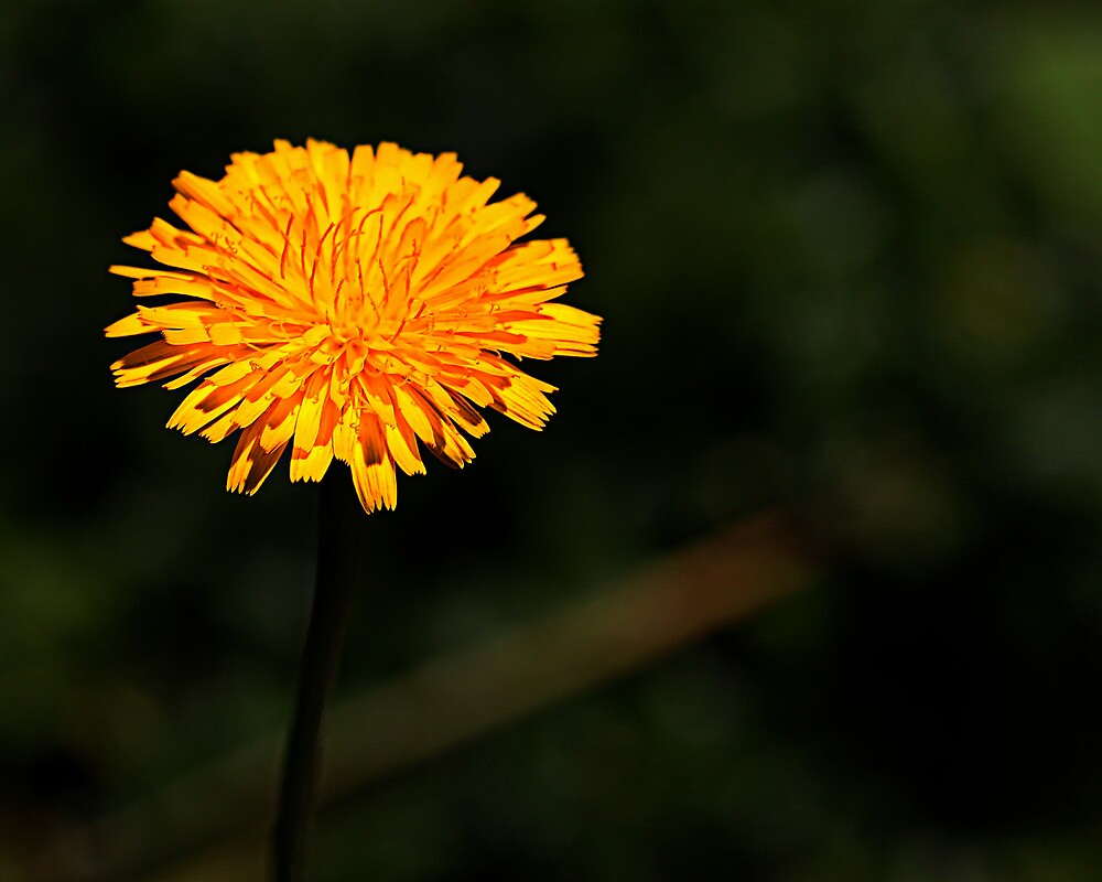 Grow a little sunshine by Michael Taggart