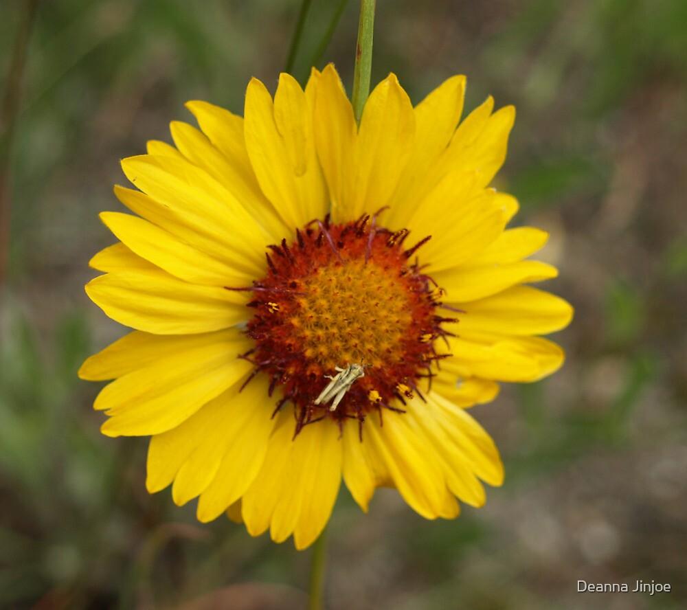 Grasshopper on Flower by Deanna Jinjoe