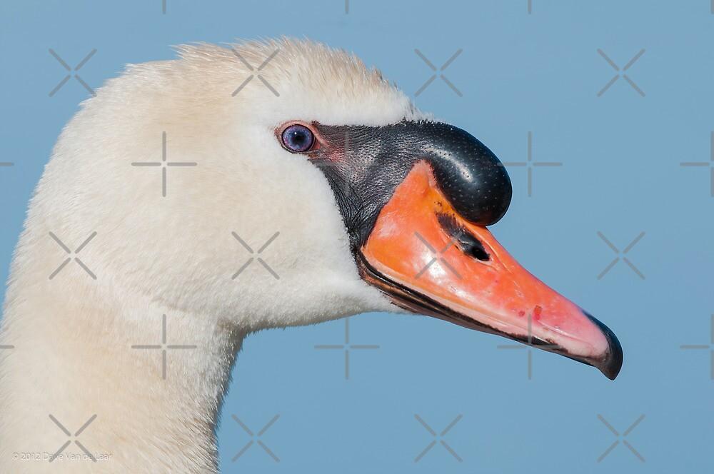 Mute Swan Profile by (Tallow) Dave  Van de Laar