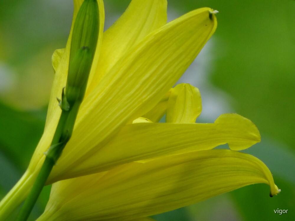 Lemon Yellow by vigor