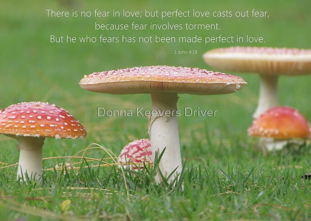 ~ Perfect Love ~ by Donna Keevers Driver