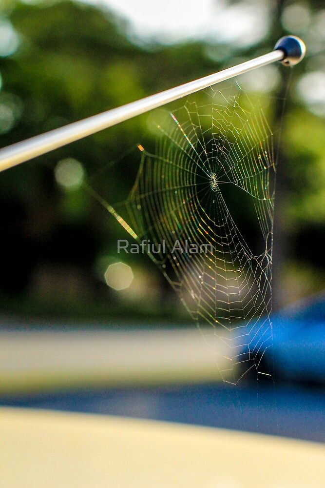 Spider Work by Rafiul Alam