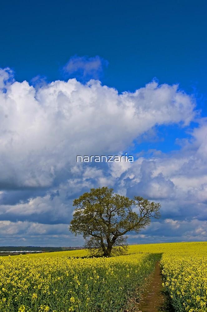 Tree in rape field. by naranzaria