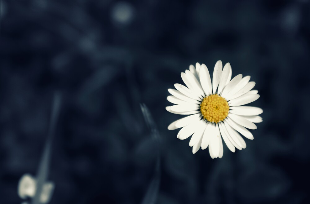 Fresh as a Daisy by Vicki Field
