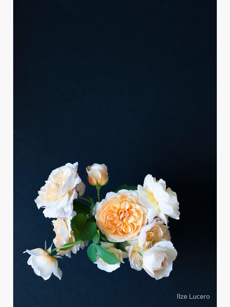 Englische Rosen von ilzesgimene