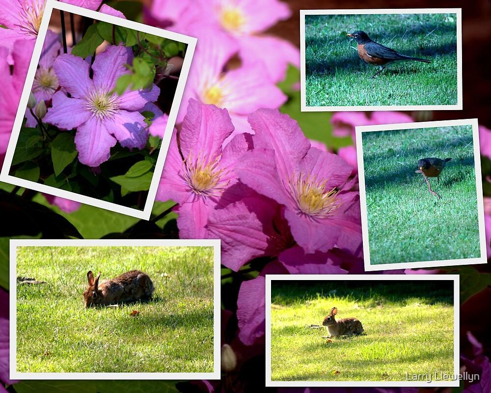 My Backyard........... by Larry Llewellyn