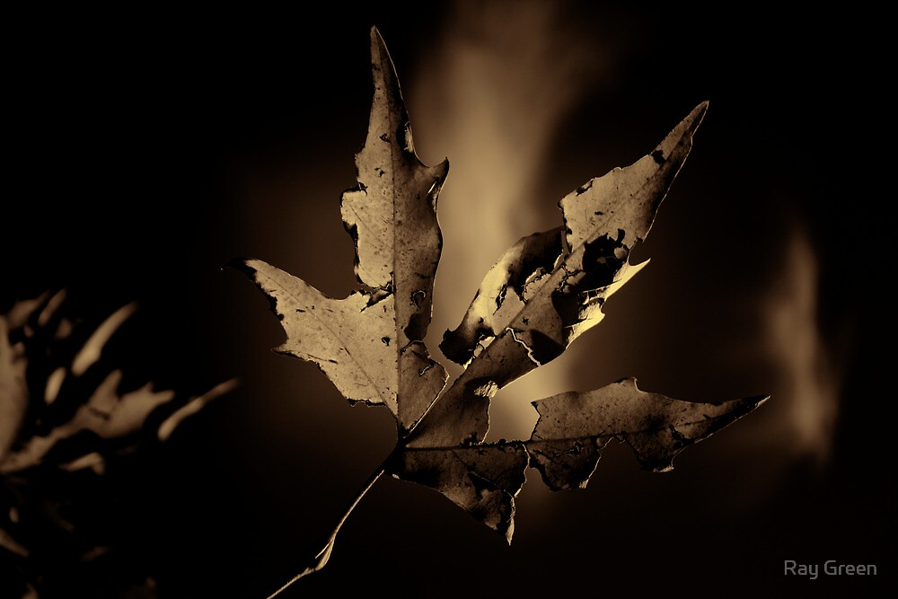 Autumn leaf by Ray Green