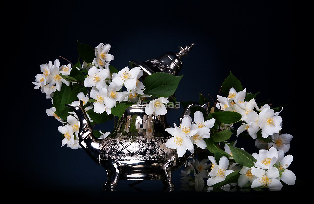 Jasmine bouquet in the teapot by torishaa