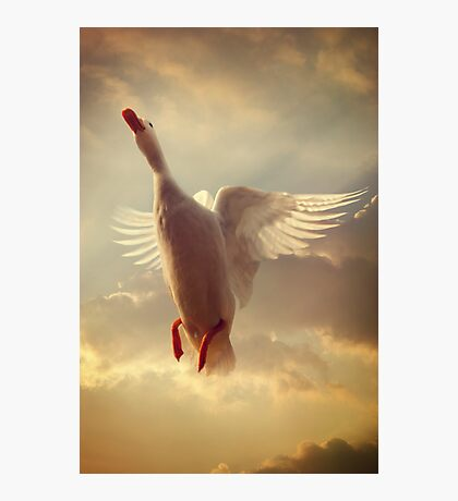 Yet Another White Duck Photographic Print