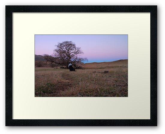 Colly watching twilight by Kenji Ashman