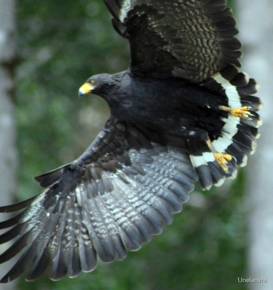 Hawk #2  by Unelanvhi