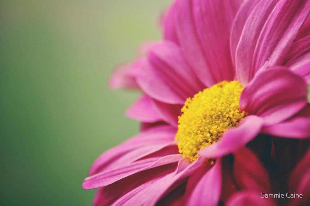 Purple Flower by Sammie Caine