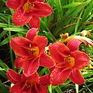 Lillys of Anaheim 1 by Ron Russell
