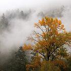 West Coast Autumn  by TerrillWelch