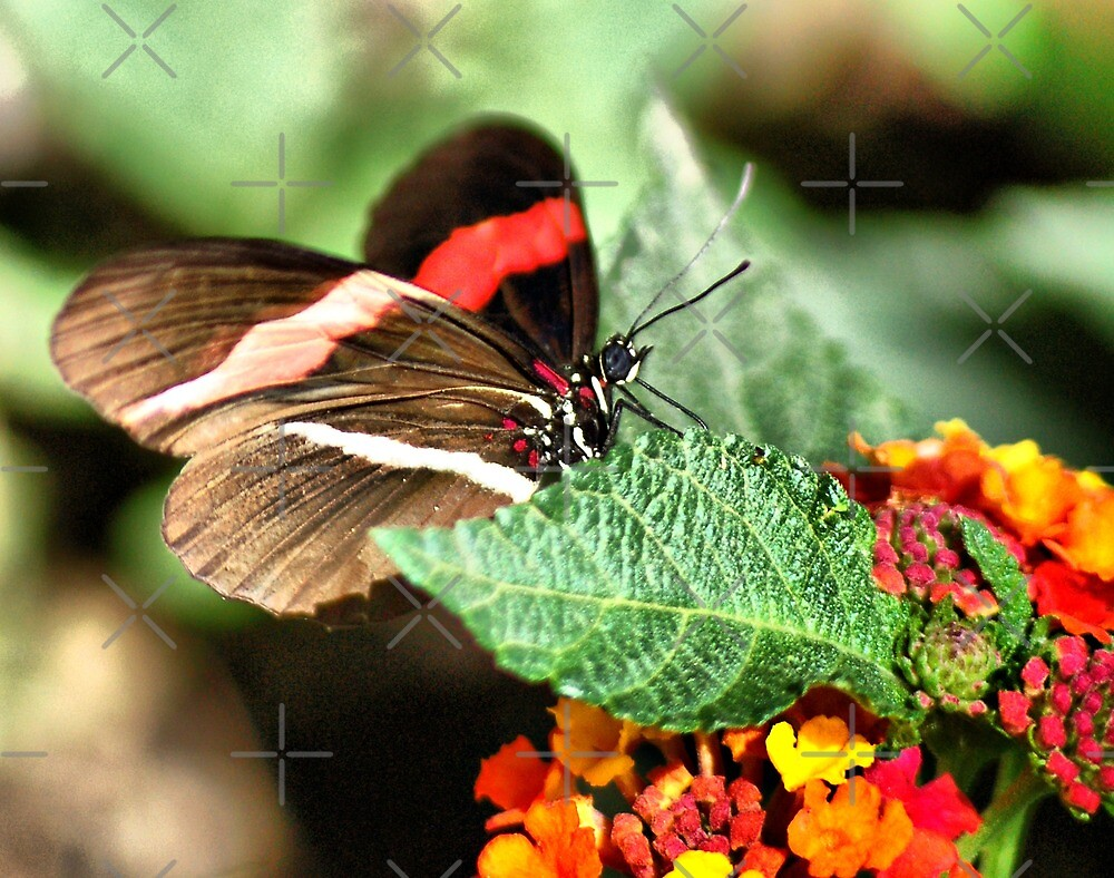 Butterfly on right flower II by loiteke