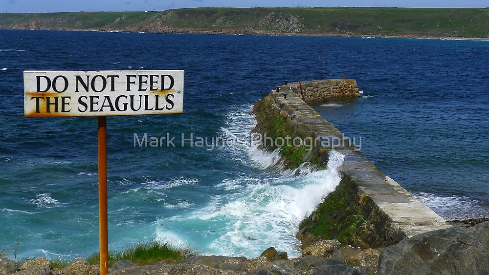 Don't Feed The Seagulls by Mark Haynes Photography