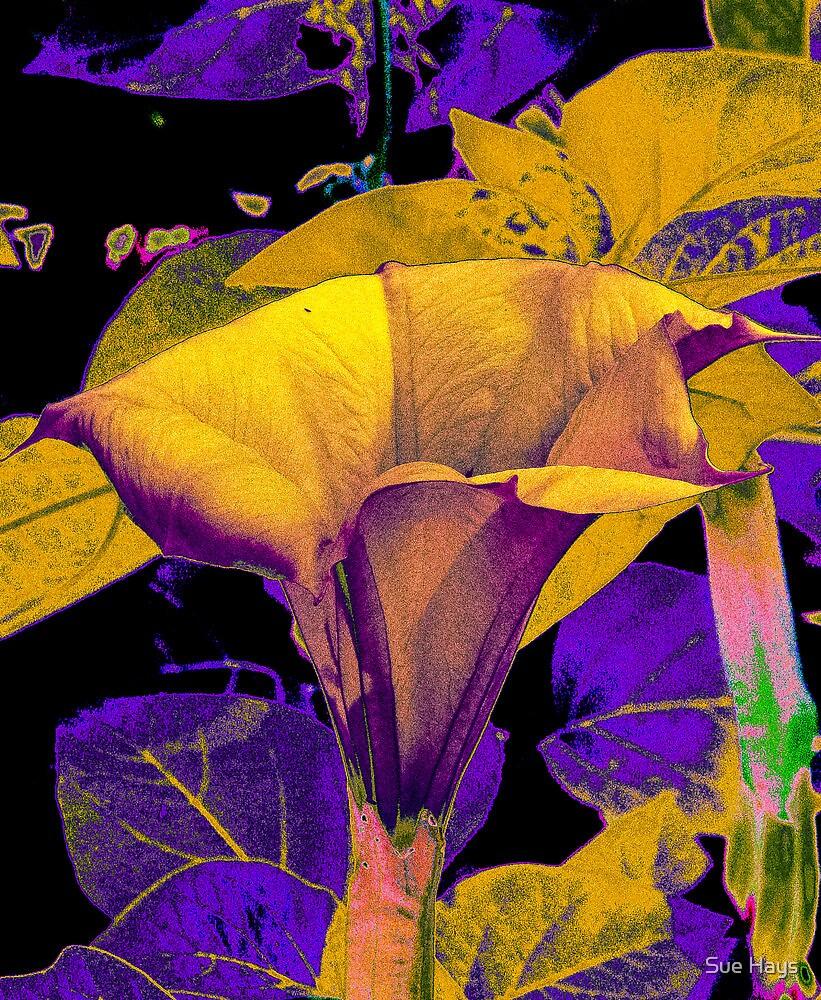 sureal abstract by Sue Hays