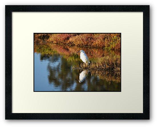 Egret in Marin by Steven  Van Gucht