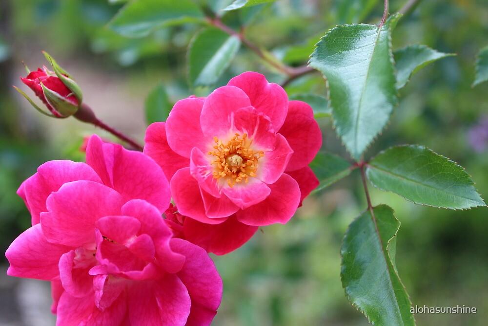 Happy Rose's by alohasunshine