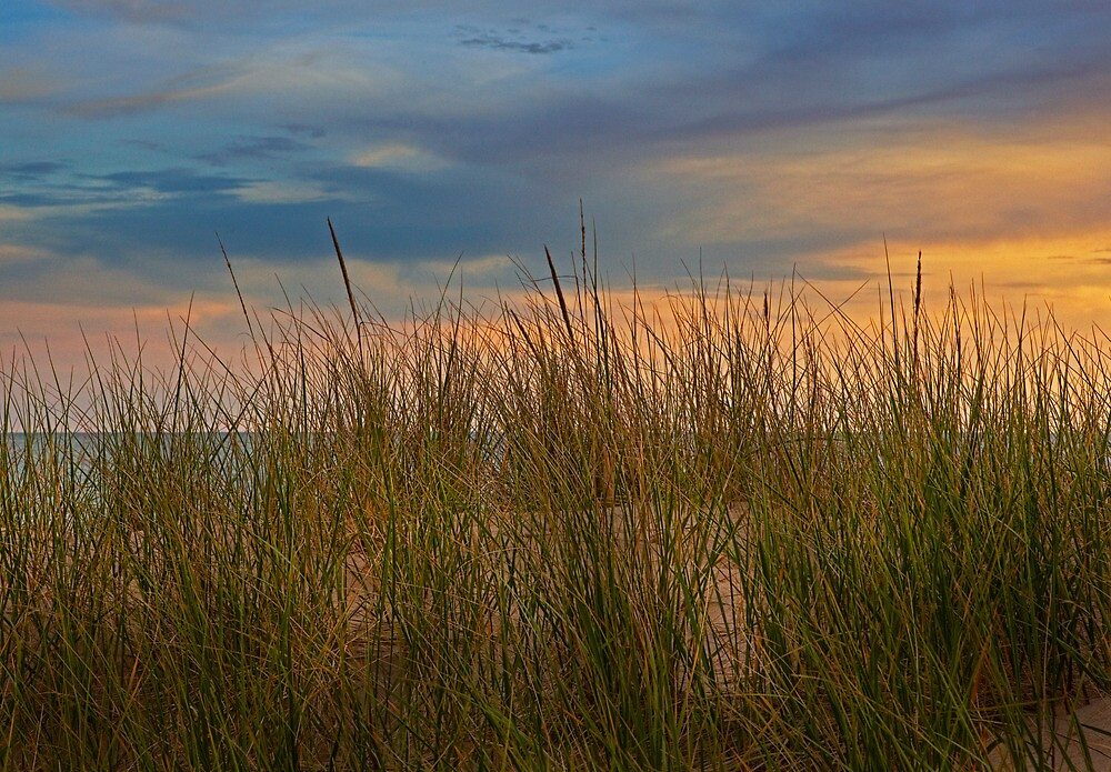 Beach Grass on the Dune during Sunset by Holland Michigan by Randall Nyhof