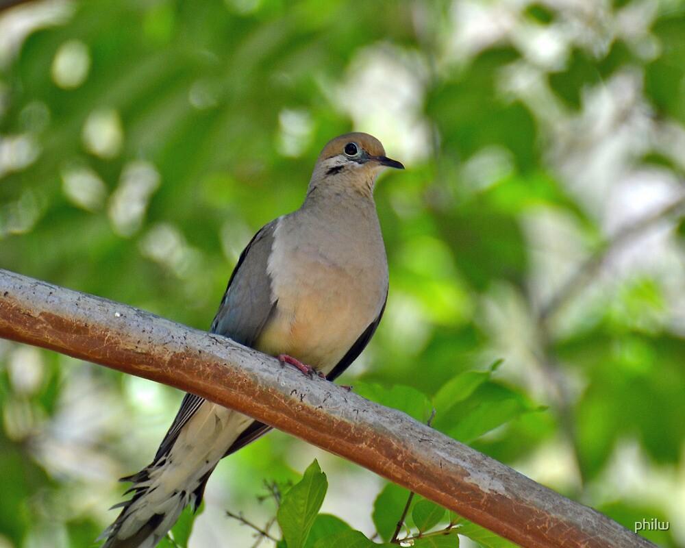 Bird in a tree.  by philw